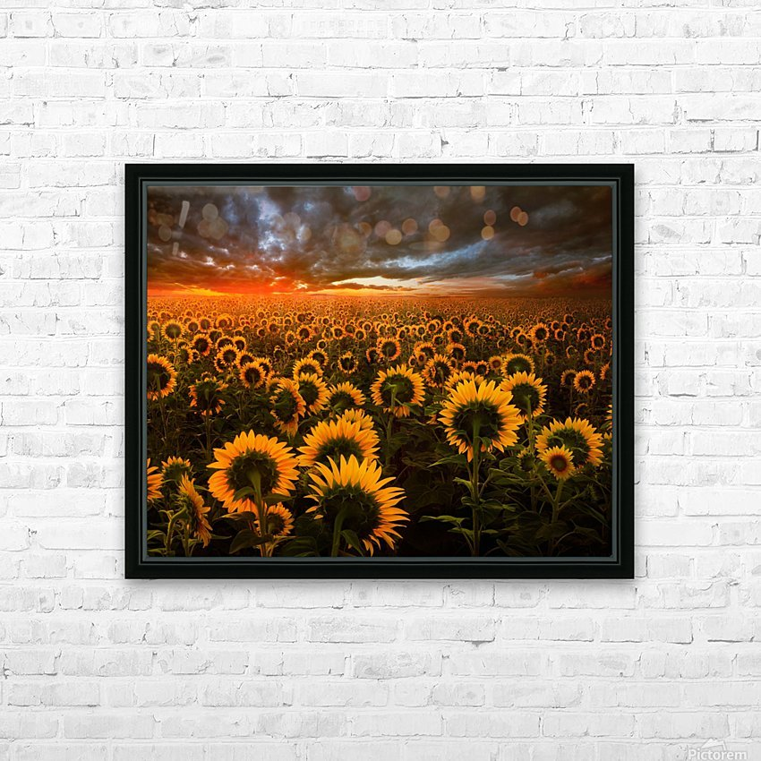 Sunflower Field HD Sublimation Metal print with Decorating Float Frame (BOX)