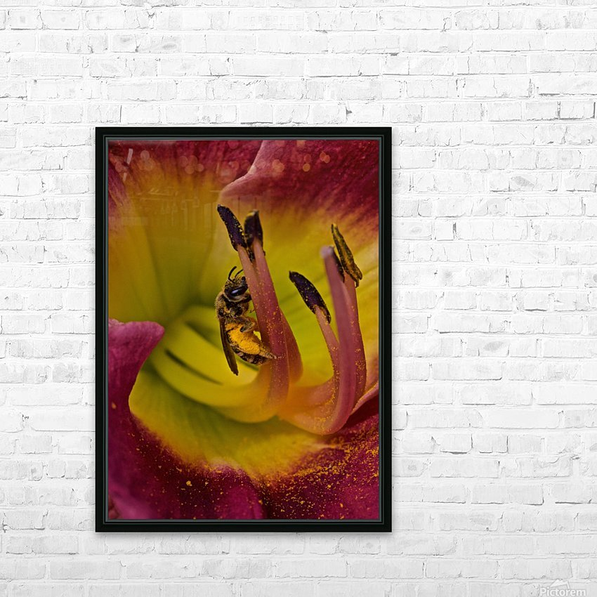 Bee Inside Corn Lily - Portrait HD Sublimation Metal print with Decorating Float Frame (BOX)