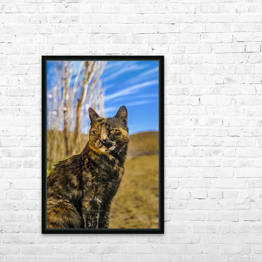 Adult Wild Cat Sitting and Watching HD Sublimation Metal print with Decorating Float Frame (BOX)