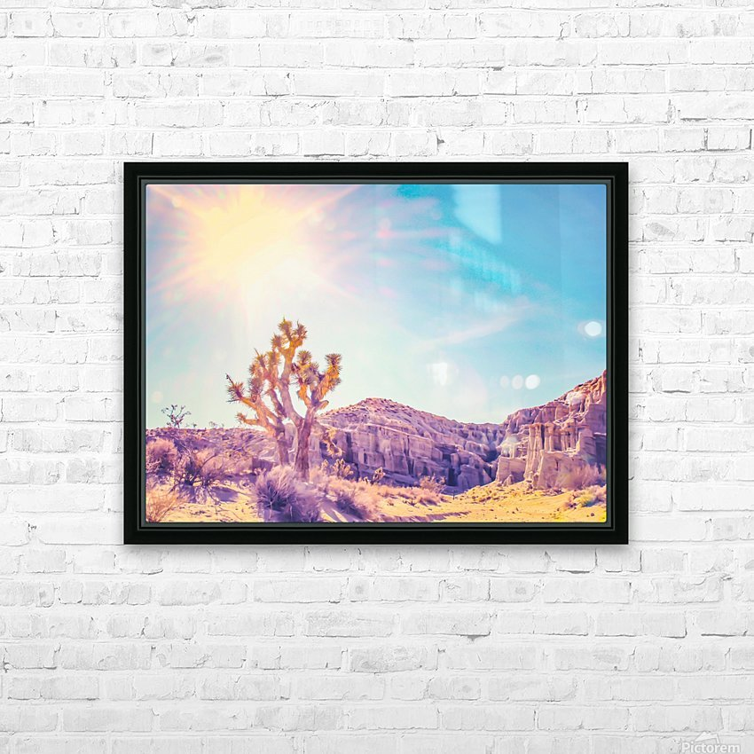 cactus at the desert in summer with strong sunlight HD Sublimation Metal print with Decorating Float Frame (BOX)