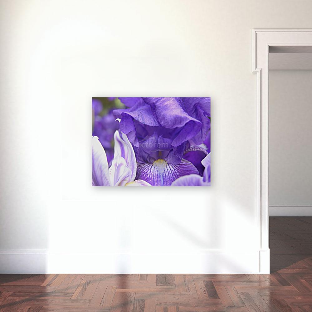 Blue Iris Photograph  Art
