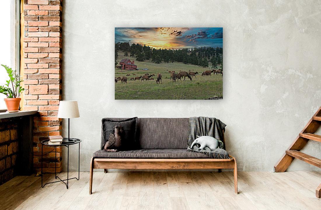 Colorado Elk  Art