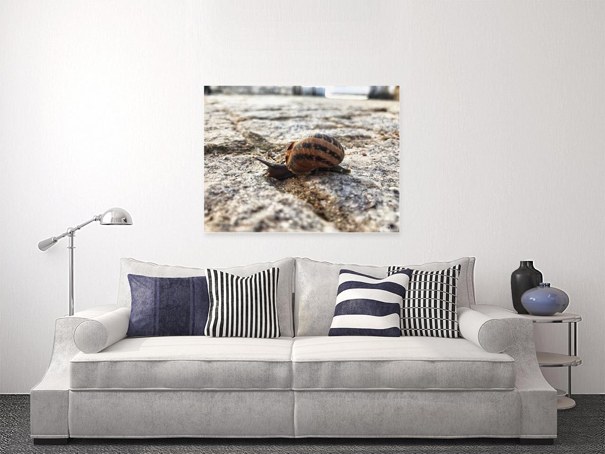 Little snail in the village of Portugal  Art