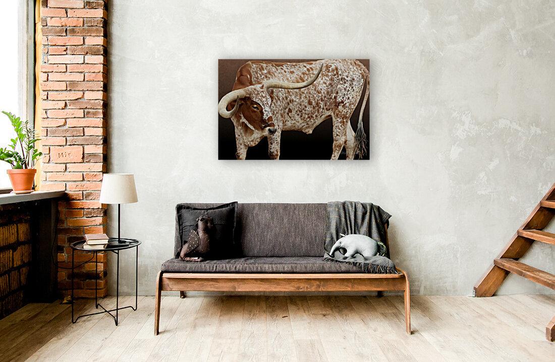 Longhorn Steer Profile 7x5  Art