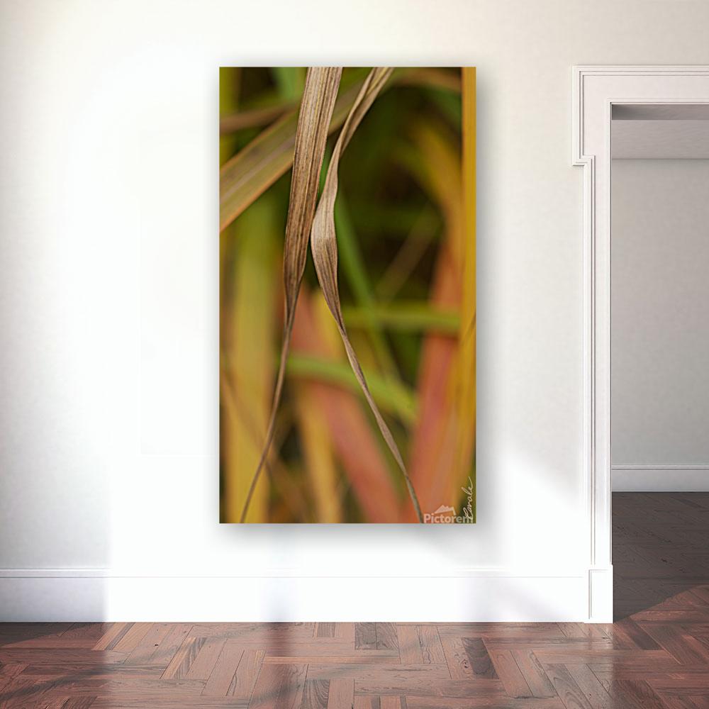 Flamboyantes Graminees no. 5 - Flamboyant Grasses no. 5  Art