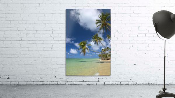 Hawaii, Palm Trees Lean Over Beach, Calm Turquoise Ocean, Dramatic Sky.