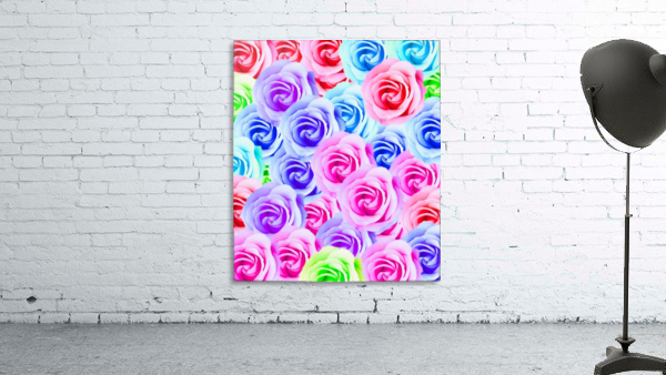 closeup colorful rose texture background in pink purple blue green