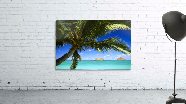 Hawaii, Oahu, Lanikai, Palm Tree Foreground, With Mokulua Islands Background, Sailboat In Turquoise Waters.