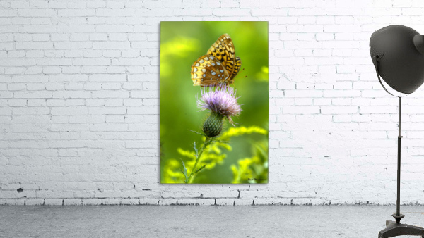 Thistle Nectar