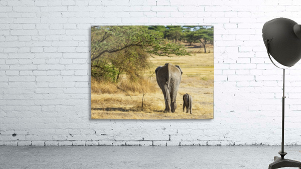 An African Elephant with it's young; Tanzania