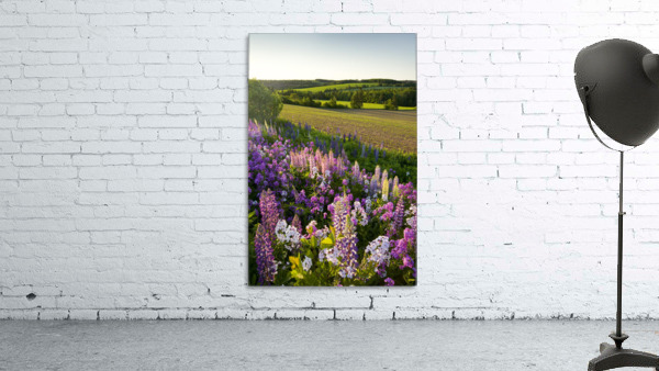 bedroom colors paint lupins and phlox flowers clinton prince edward island 10359