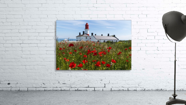 Souter Lighthouse with a field of red poppies in the foreground; South Shields, Tyne and Wear, England