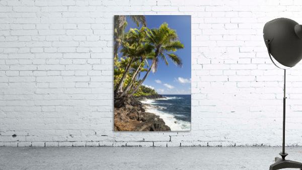 Palm trees along the Puna coastline, near Kalapana; Island of Hawaii, Hawaii, United States of America