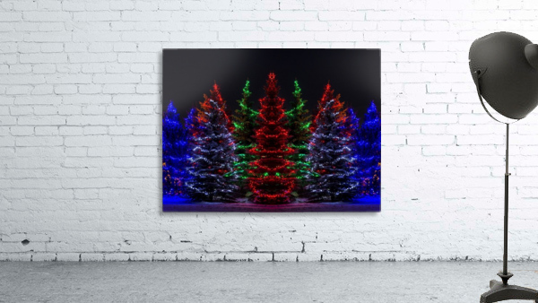 Colourful Christmas lights around several evergreen trees; Calgary, Alberta, Canada