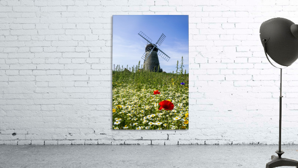 A windmill against a blue sky and cloud with a field of wildflowers in the foreground; Whitburn, Tyne and Wear, England