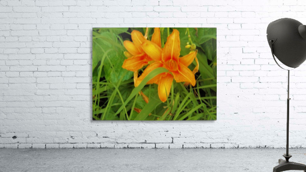 Oranger Lilly 2