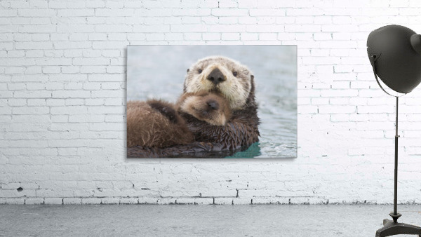 Female Sea Otter Holding Newborn Pup Out Of Water, Prince William Sound, Southcentral Alaska, Winter