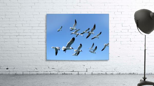 Seagulls against a clear blue sky