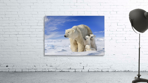 View Of Polar Bear Sow (Ursus Maritimus) With Her Triplet Cubs On The Wind Swept Plains Of Wapusk National Park, Manitoba, Canada, Winter, Composite