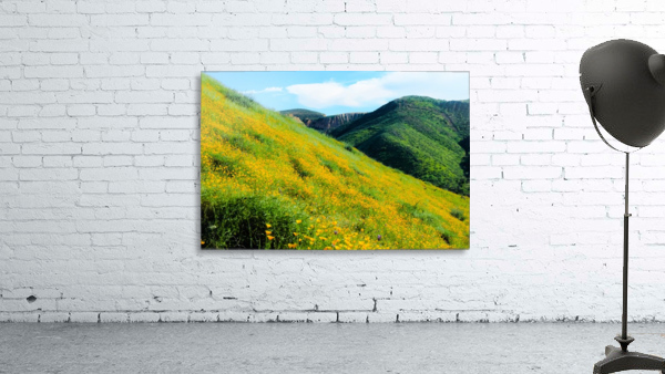yellow poppy flower field with green leaf and green mountain and cloudy blue sky in summer