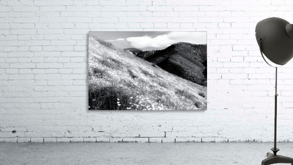 poppy flower field with mountain and cloudy sky background in black and white