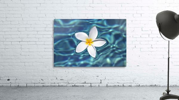 Plumeria flower floating in clear blue water.