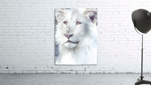 Juvenile White Lion