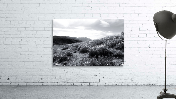 poppy flower field with mountain and cloudy sky in black and white