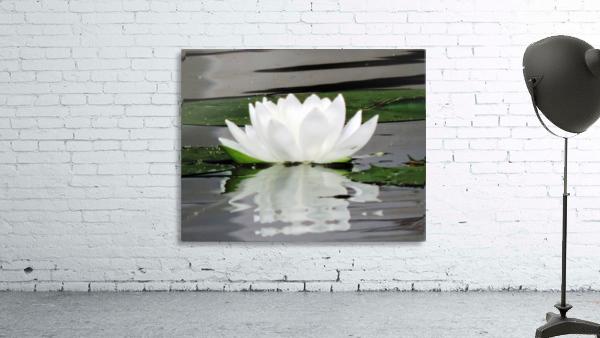 FloweringLilyPad
