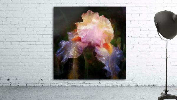 Enchanted Iris