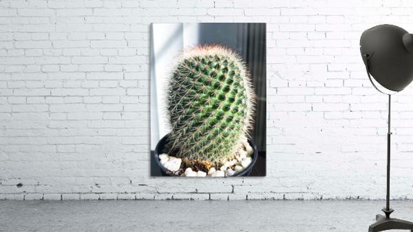 closeup green cactus texture with morning sunlight