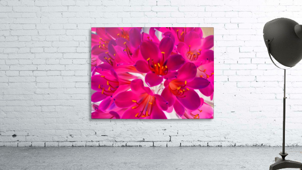 closeup pink flower texture abstract background with orange pollen