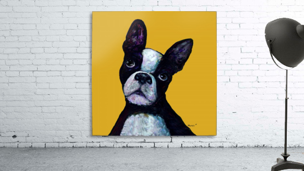 BOSTON TERRIER ON YELLOW