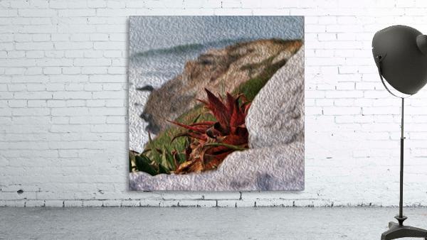 Coastal Red Aloe Vera