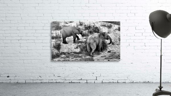 Elephant Youth
