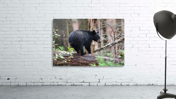 251-Cub on a Log