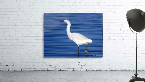 Heron White Walking