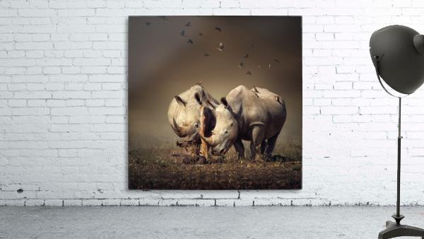 Two Rhinoceros with birds
