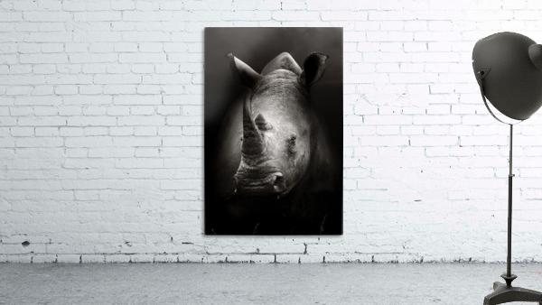Rhinoceros portrait