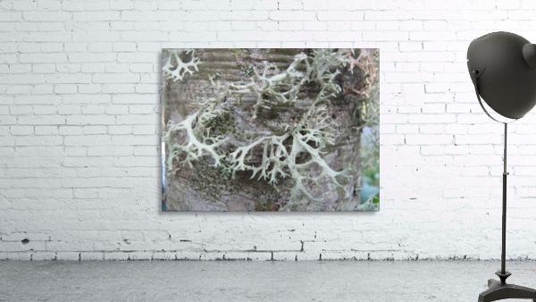 Bark With Lichen 02