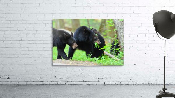 3540-Bear walk
