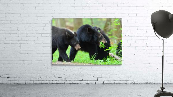 3541- Black bear
