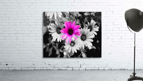 One Colored Daisy