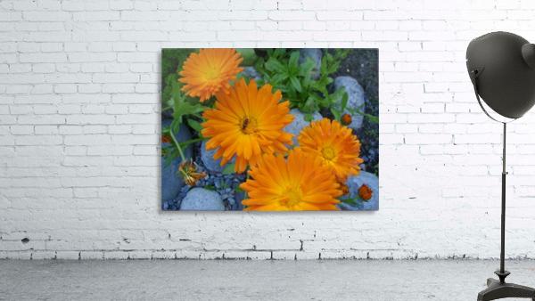 Orange Daisies & Bee