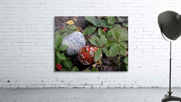 Red Mushroom & Rock