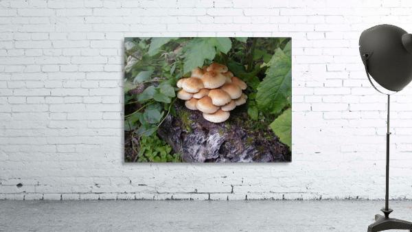 Bun Mushrooms