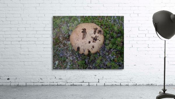 Cookie Mushroom