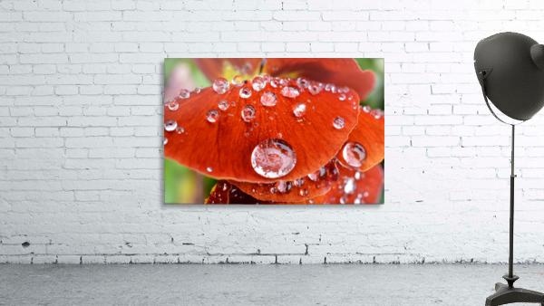 Raindrops On Orange Pansy Petal Photograph