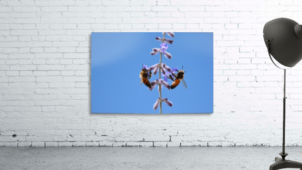 Two Bees On Vine Photograph