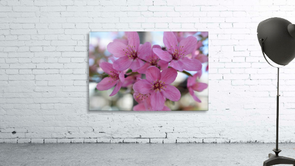 Pink Dogwood Photograph